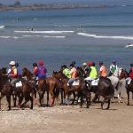bufon-de-arenillas-hotel-te-anima-a-disfrutar-de-las-carreras-de-caballos-en-la-playa-sta-marina-2